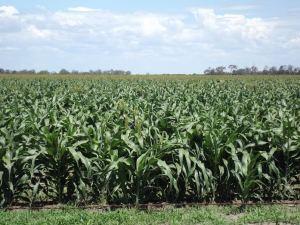 Hopeland crop Karen