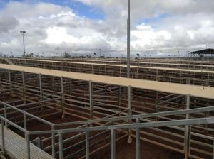 roma sale yards
